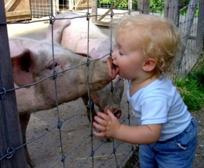 Swine flu child kissing a pig