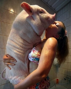 WARNING DON'T DO THIS TO A PIG