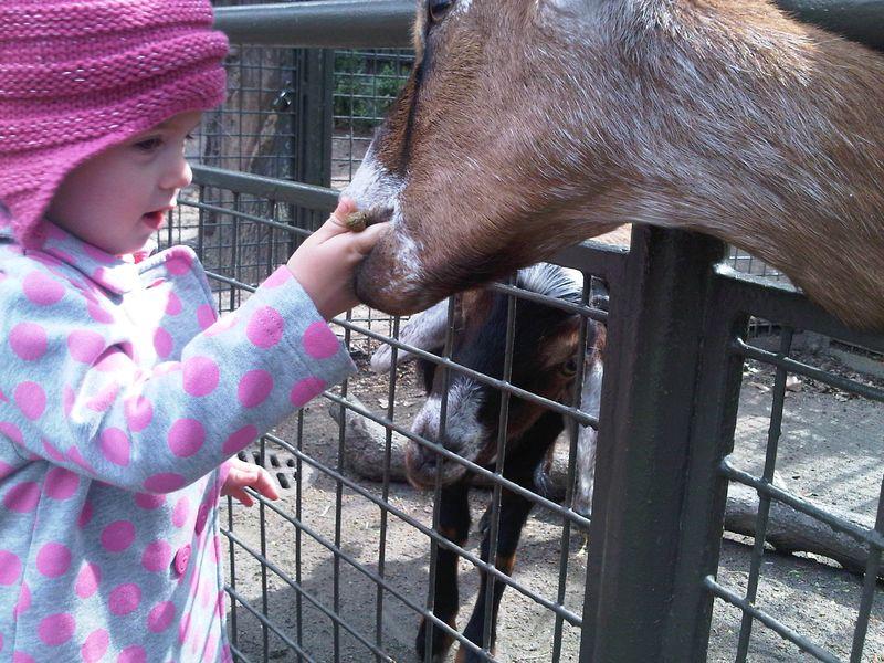 Sophia goat