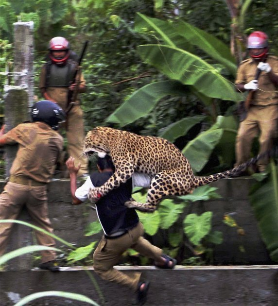 Leopard kicking ass