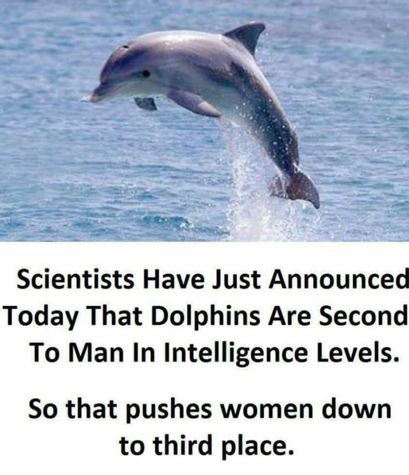 Dolphin vs women intelligence