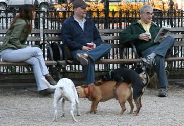 Dog_park_3_some