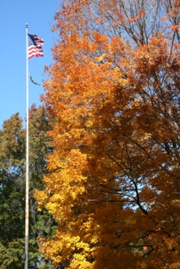 American_flag_leaves