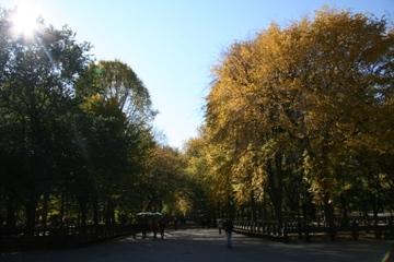 Autumn_central_park