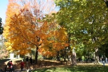 Autumn_central_park_3